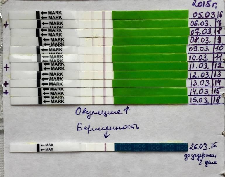 На какой день после овуляции можно делать тест на беременность, чтобы не ошибиться, через сколько суток он покажет результат, как определить зачатие на раннем сроке?
