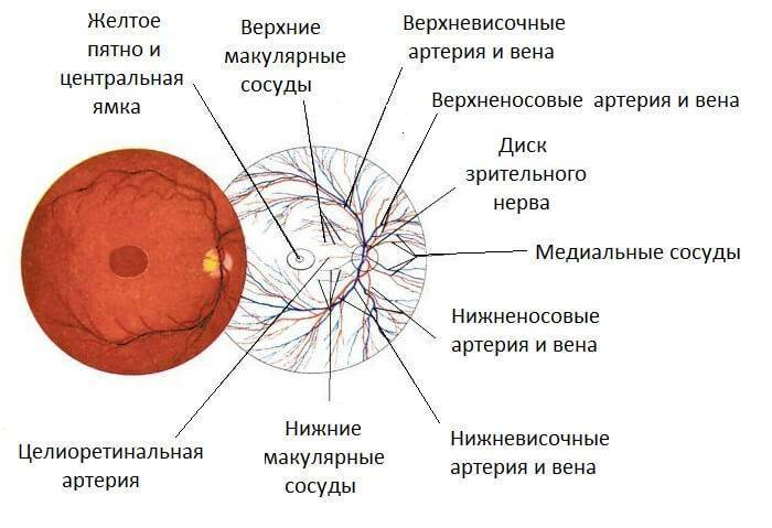 Почему лопаются сосуды в глазах у детей, грудничков и старше