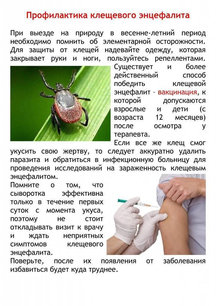 Клещевой боррелиоз: признаки и лечение инфекционной патологии