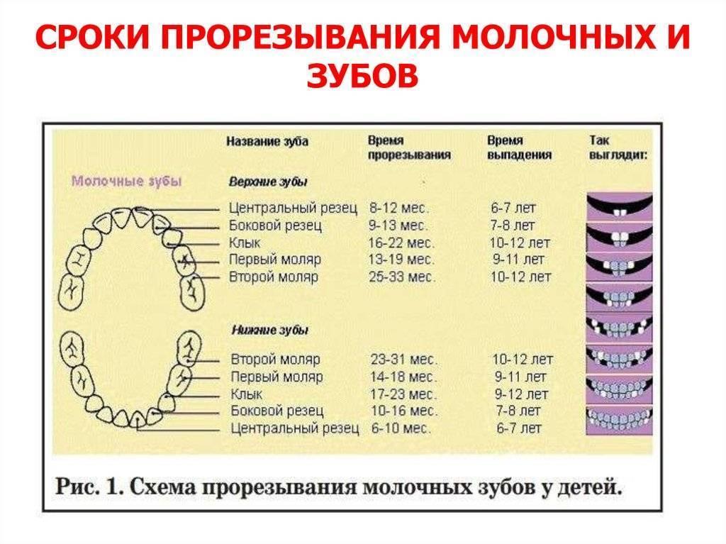Какие молочные зубы выпадают у детей: схема | фото, все ли