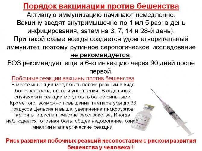 Вакцинация от коронавируса будет обязательной или добровольной в россии?