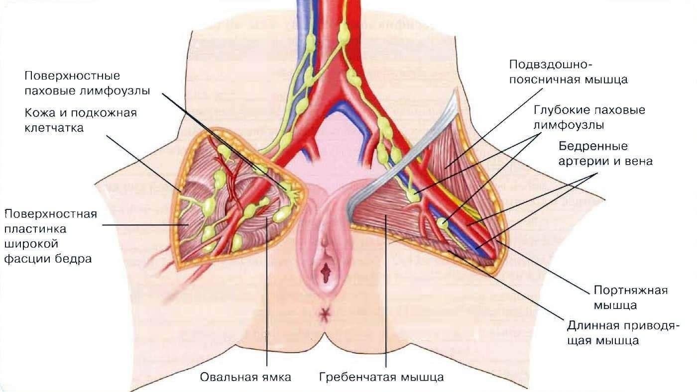 Увеличены лимфоузлы в паху у ребенка: причины воспаления у детей, симптомы, лечение