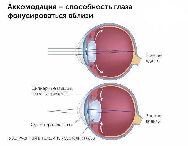 Как снять спазм глазных мышц у детей или взрослых - лечение каплями и специальной гимнастикой