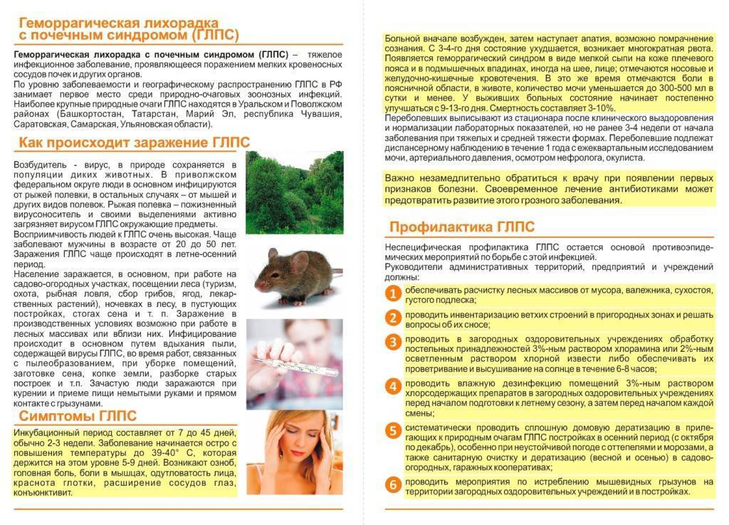 ✅ мышиная лихорадка симптомы и лечение у детей - лор.net