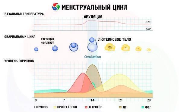 Повышенная температура во время месячных