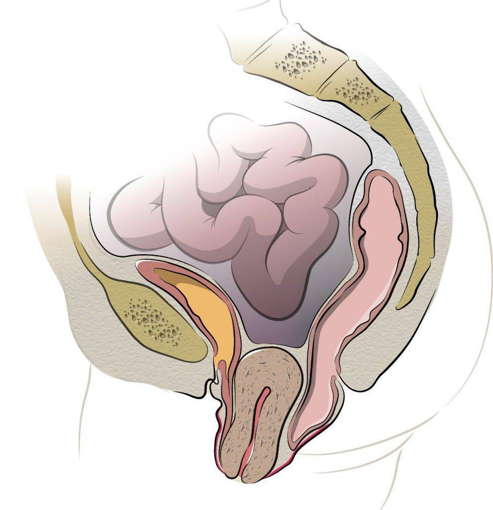 В исходное положение! что делать при опущении половых органов после родов