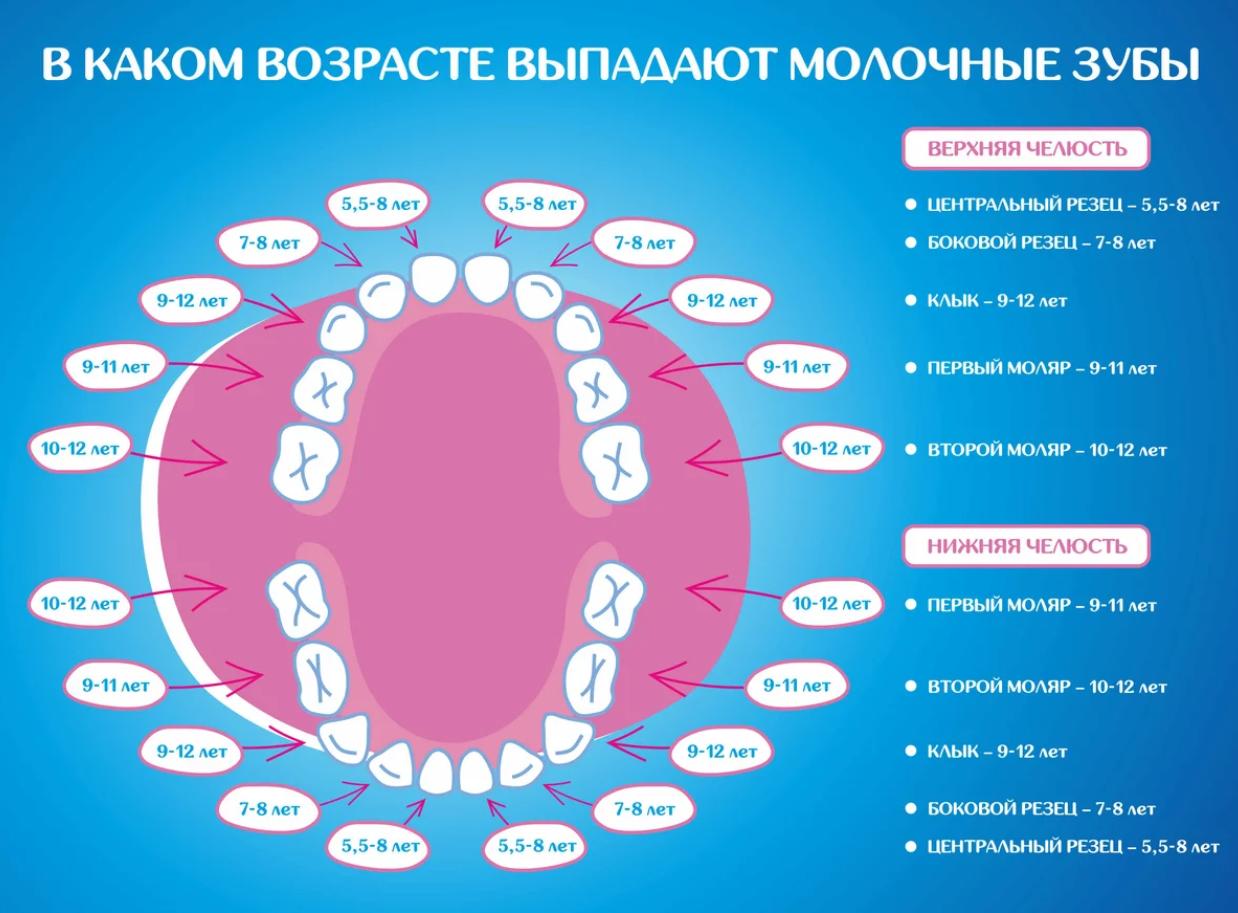 Сроки прорезывания зубов у детей - схема. таблица, особенности роста и смены зубного ряда