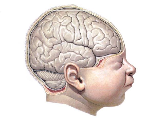 Незрелость головного мозга у детей лечение