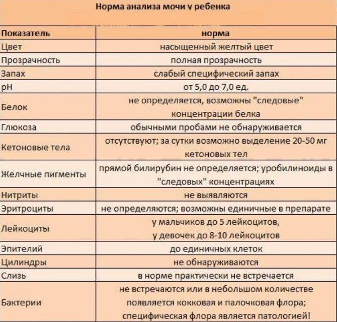 Лейкоциты в моче у ребенка: норма, таблица по разным анализам, причины отклонений