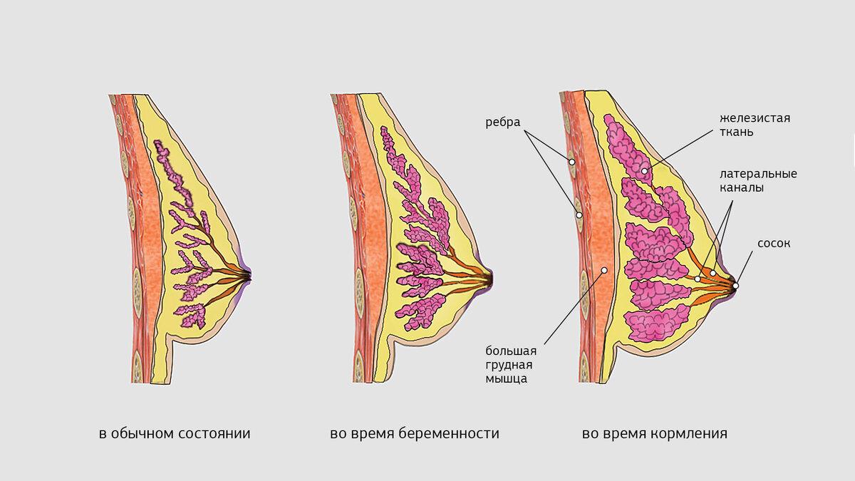 На какой неделе беременности наливается грудь. набухание груди у беременных на разных сроках