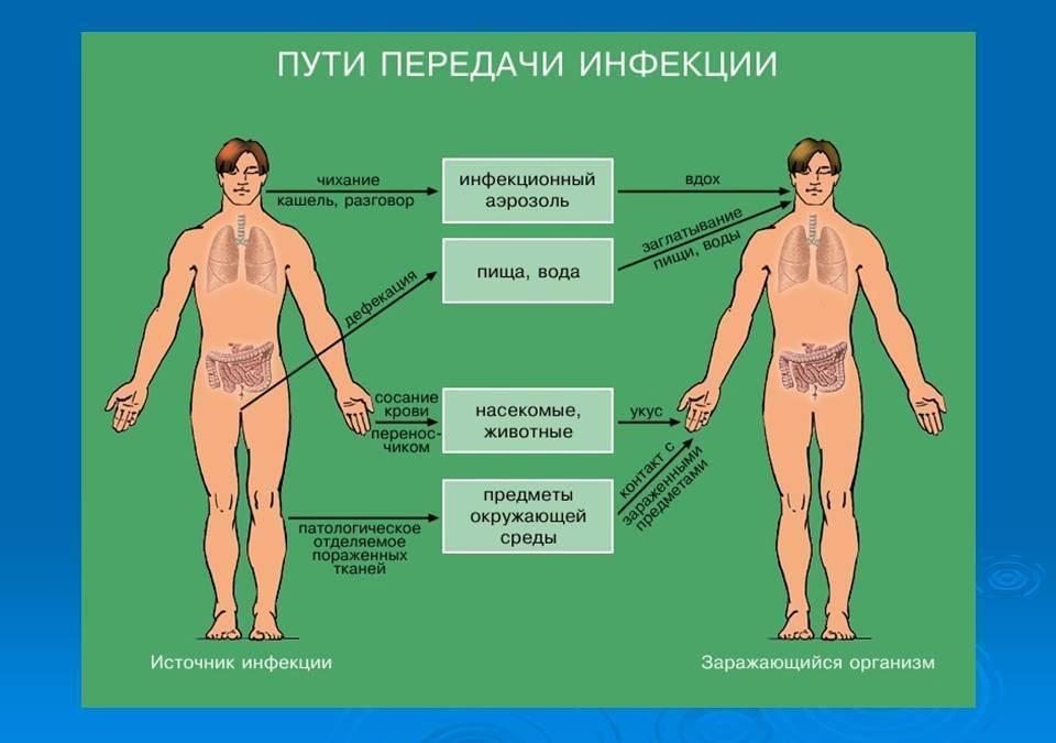Гепатит а: заразен или нет? способы и пути передачи вирусного гепатита а