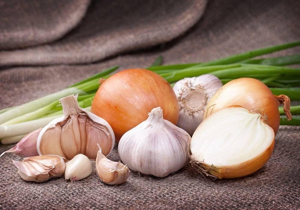 Чеснок детям: с какого возраста можно давать его есть и со скольких лет разрешается нюхать в лечебных целях, а также когда овощ противопоказан?