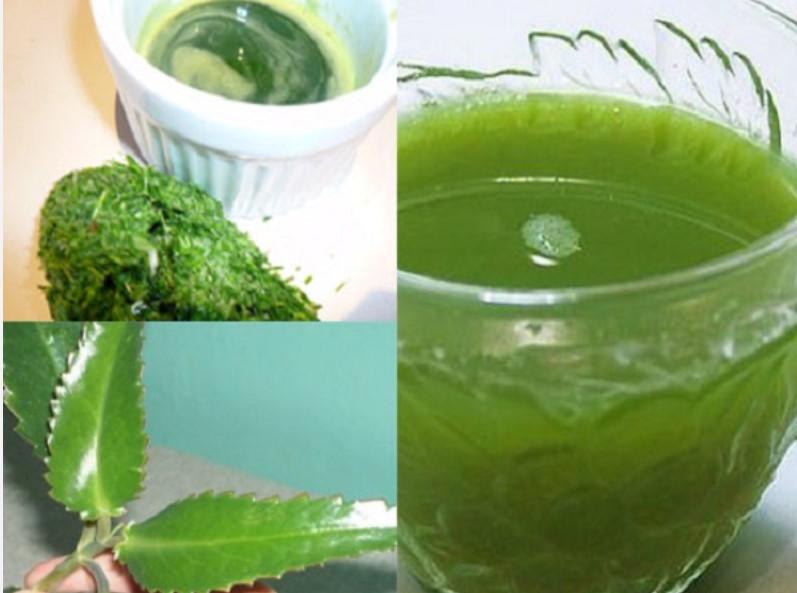 Сок каланхоэ при насморке: лечебные свойства, нюансы приготовления сока для закапывания в нос ребёнку