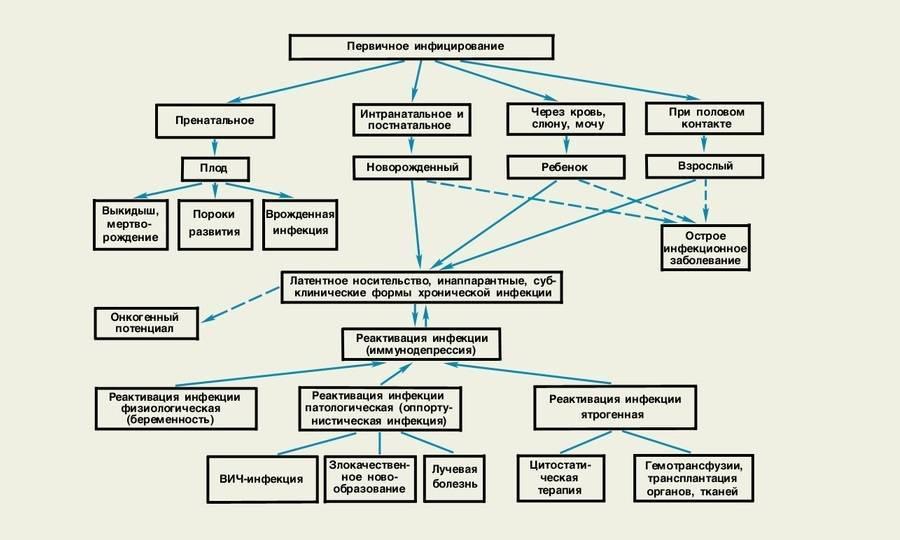 Е. комаровский: цитомегаловирус у ребенка - симптомы и лечение цитомегаловирусной инфекцит