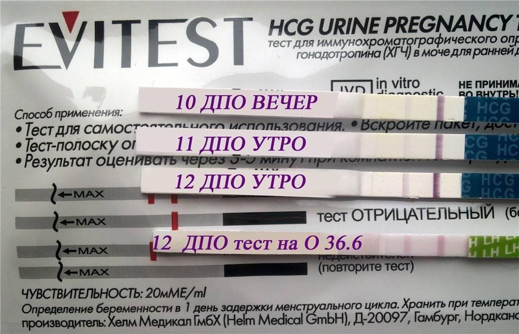 Тест на беременность до задержки месячных: с какого срока он показывает достоверный результат?