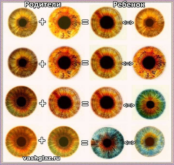Таблица определения цвета глаз у ребёнка от родителей: как понять и использовать