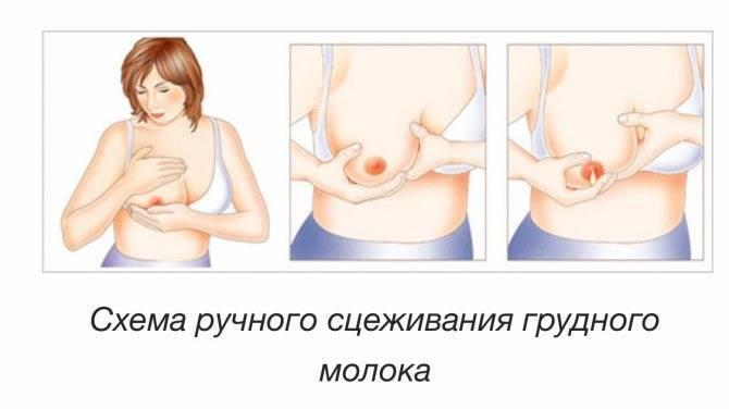 Сцеживание грудного молока, как правильно сцеживать молоко