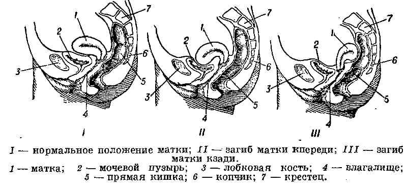 ᐉ какие позы нужно делать чтобы забеременеть. а что делать, если у женщины седловидная матка? периоды менструального цикла женщины - ➡ sp-kupavna.ru