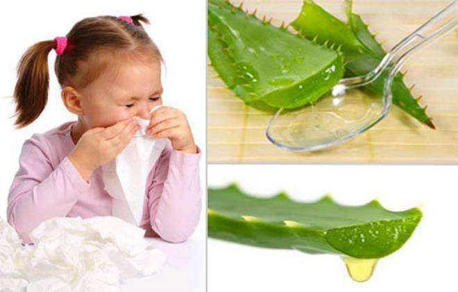 Алоэ от насморка для детей - рецепты, применение, меры предосторожности