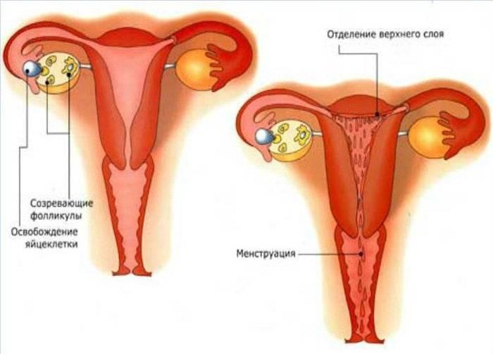 Долго идут месячные после выскабливания. через какое время начинаются месячные после выскабливания матки? воздействие выскабливания на женский организм
