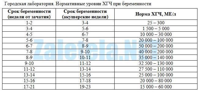 Тест хгч: когда сдавать и через сколько покажет беременность : saluma.ru