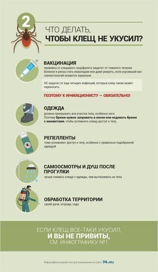 Укус клеща у ребенка (33 фото): симптомы и признаки на голове, профилактика боррелиоза после укуса, как выглядит на теле, последствия