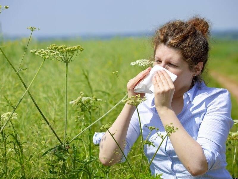 Аллергия на пыльцу: 7 способов уменьшить симптомы поллиноза