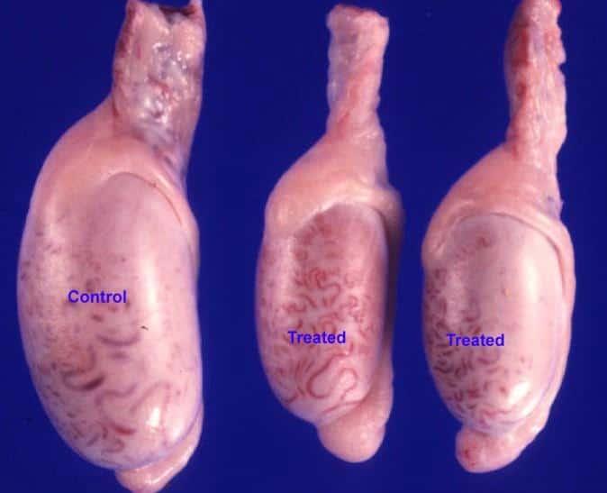 Гипоплазия яичек: симптомы, диагностика.