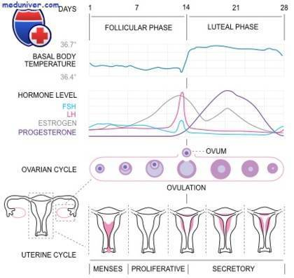 17-он прогестерон повышен в фолликулярной фазе у женщин - что делать, причины и лечение |  эко-блог