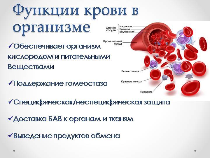 Заболевания крови: анализы, признаки и симптомы, синдромы , лечение, список названий болезней