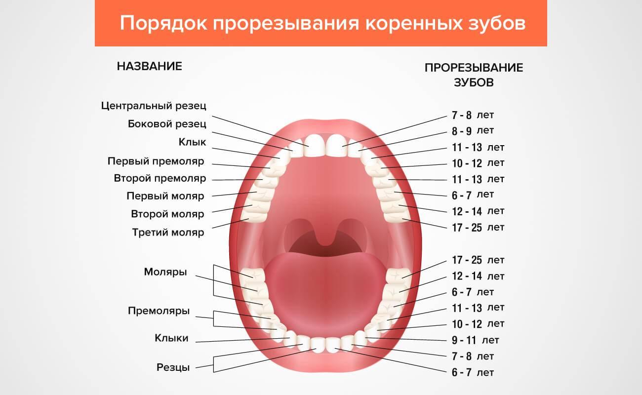 Когда меняются клыки у детей на постоянные - стоматолог