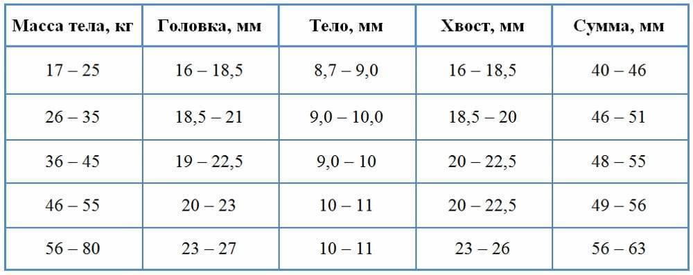 Каковы нормальные размеры селезенки у взрослых по узи, и как подготовиться к процедуре?