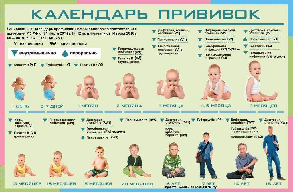 Национальный календарь профилактических прививок на 2020 год