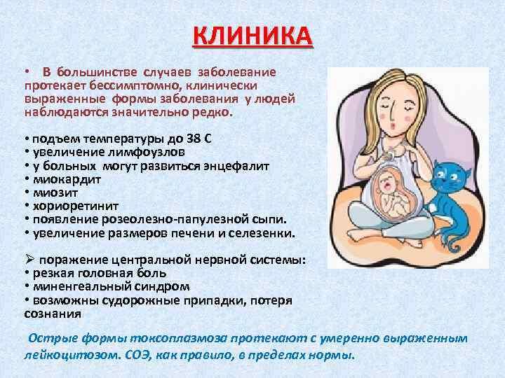 Токсоплазмоз - причины, симптомы, диагностика и способы лечения