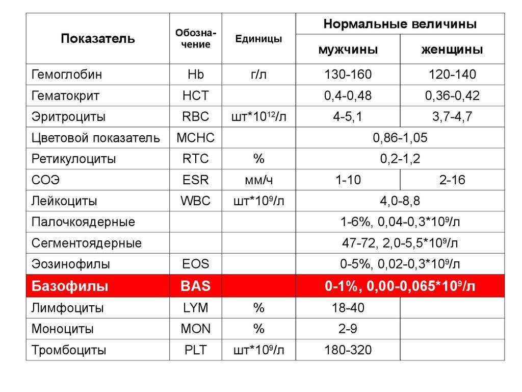 Сегментоядерные в крови: норма в анализе у женщин, мужчин и детей, что это такое