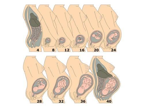 Щелчки в животе при беременности - здравответ