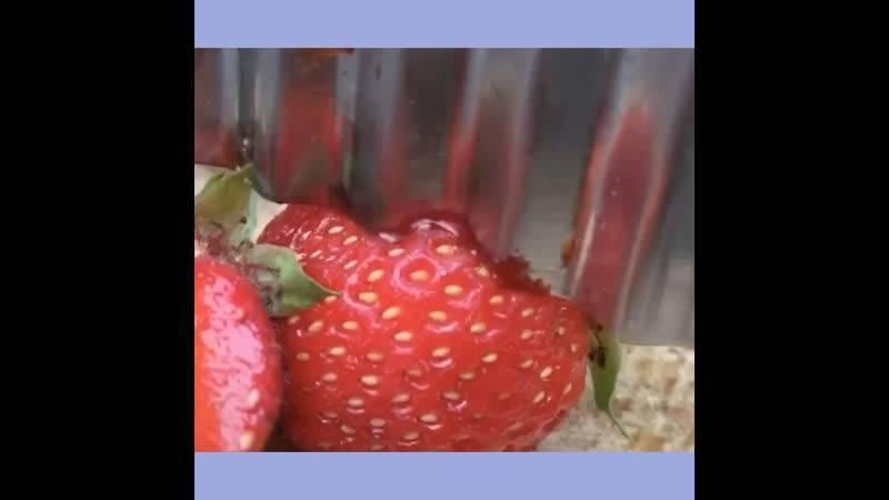Аллергия на клубнику у ребенка: фото, симптомы, реакция на другие ягоды
