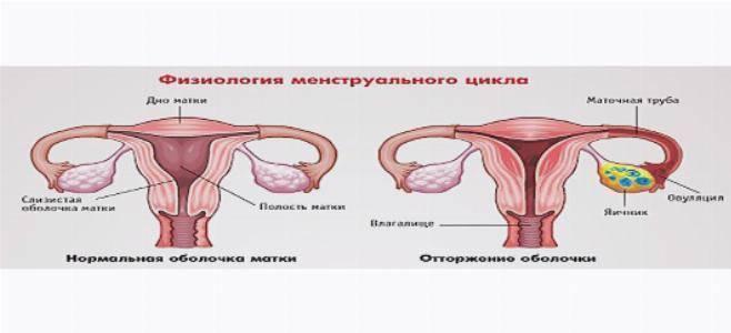 Причины боли в груди при задержке месячных и отрицательном тесте: как определить и исключить беременность, о чем говорит симптоматика, диагностика и лечение