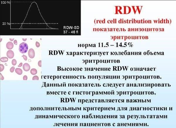 Ширина распределения эритроцитов: норма, повышена, понижена - диагноз онлайн