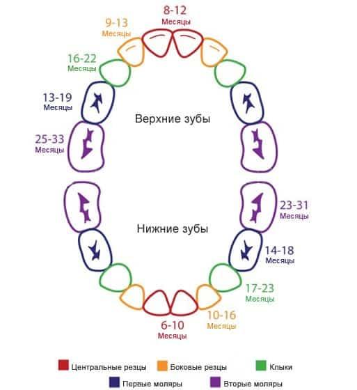 Порядок прорезывания молочных зубов у детей — сроки и схема