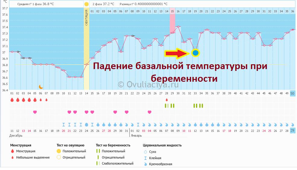 Какая базальная температура при беременности считается нормой? / mama66.ru