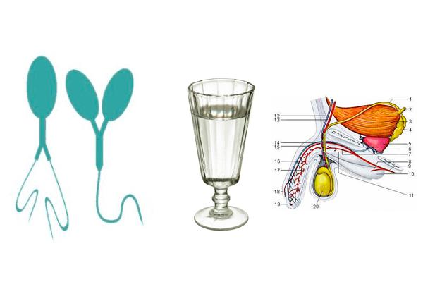 Алкоголь и спермограмма информация, можно ли пить перед сдачей