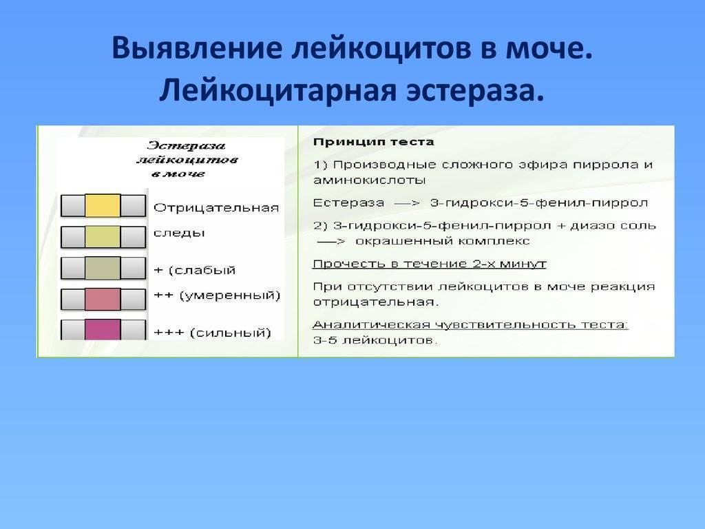 Лейкоциты в моче у ребенка: причины повышения, таблица, норма