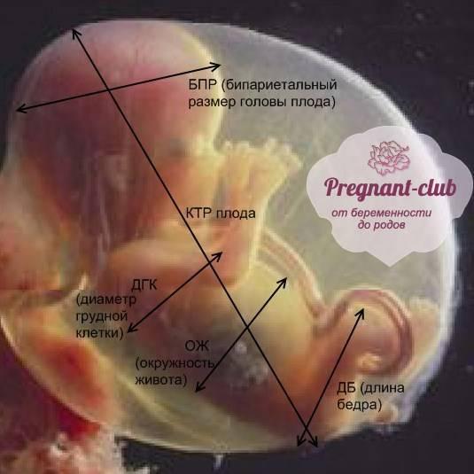 Особенности влияния короткой пуповины на беременность и роды